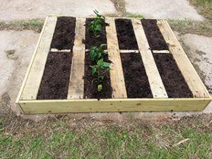 pallet garden 2