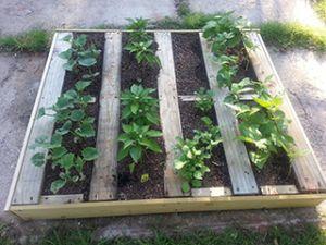 pallet garden 3
