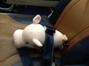 Pig Seatbelt