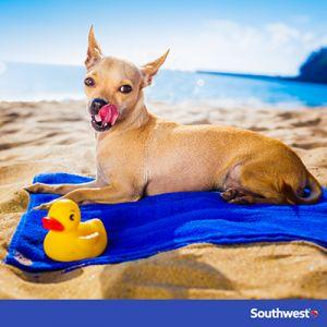 Dog-on-beach__blog-400x400