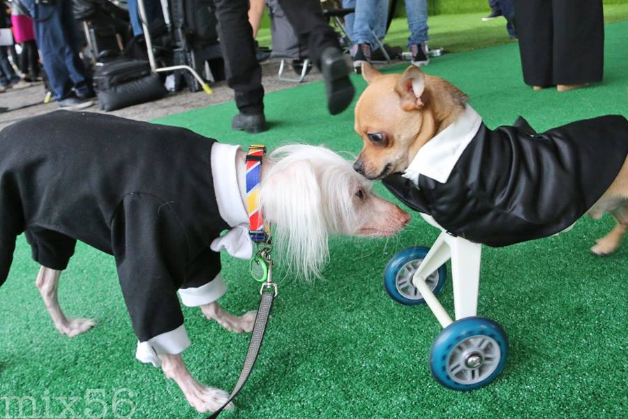 In his green carpet best, TurboRoo meets a new friend, Nathan, at the World Dog Awards
