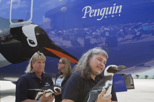 Penguin One