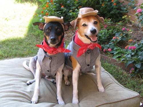 Cowboy Pups