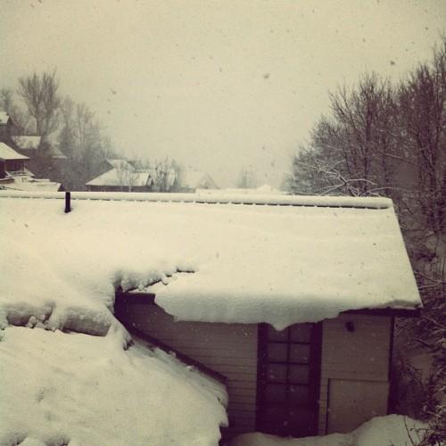 Snowy Sundance