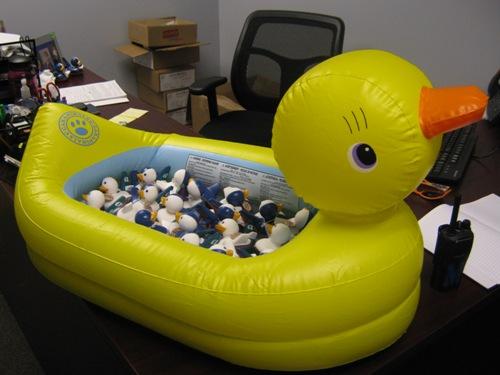 WingMate Ducks