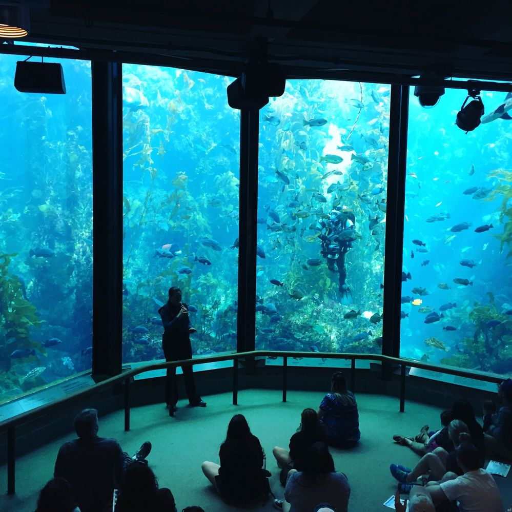 Kelp Forest Tank at the Monterey Bay Aquarium Monterey.jpg
