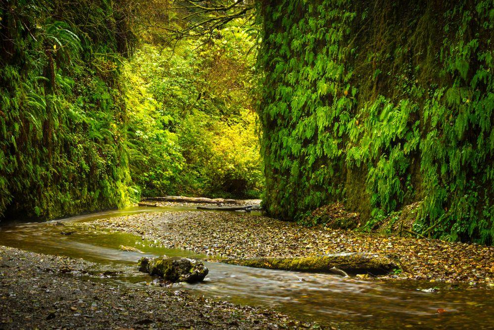 Redwood National Park.jpg