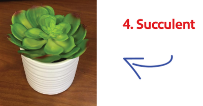succulant.png