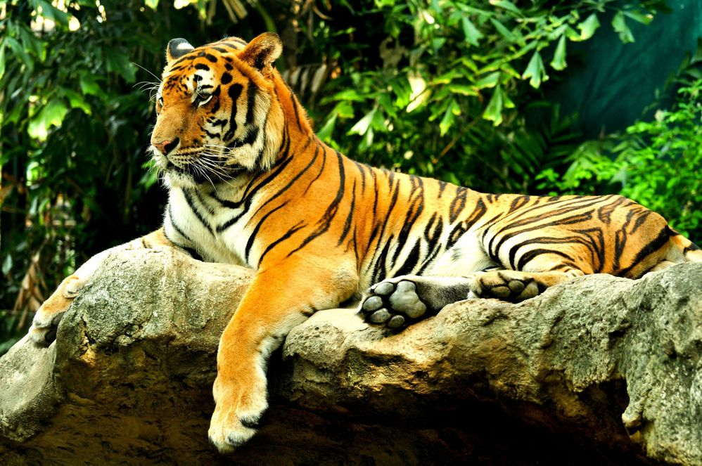 Take the kids on an exotic adventure at the Nashville Zoo.